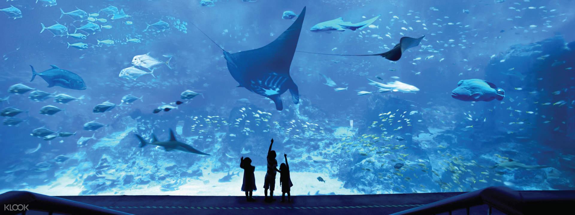 S.E.A. Aquarium Ticket Sentosa, Singapore - Klook
